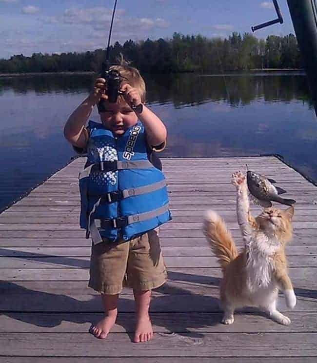 Cats Caught 'Catnapping' Human Food