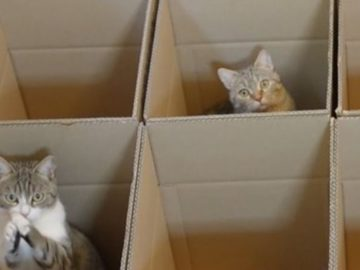 fe 360x270 - Cat In a Box: Here's a Cat Experiment That Will Make You Go Awww!