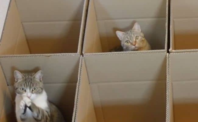 Cat In a Box: Here's a Cat Experiment That Will Make You Go Awww!