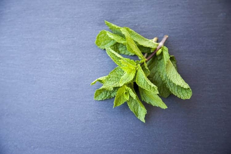 mint as a remedy for abdominal pain