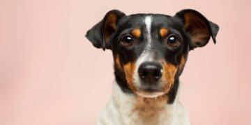 Dog Breeds From Around The World