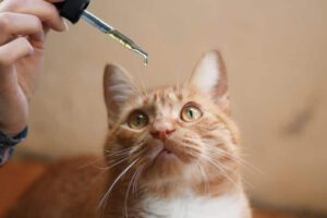 What's CBD Oil for Cats1