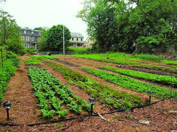 Gardening Tips for Beginners4